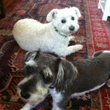 Louie and Bentley, getting along nicely - a pet-business strategy for SEO quality links