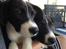 Photo for puppies blog post PetCopywriter.com