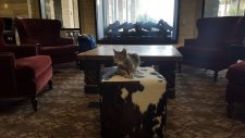 Bug the cat attends the Veterinary Innovation Summit