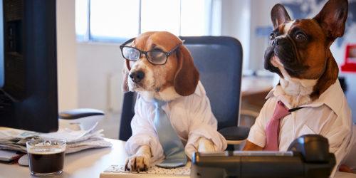 Dog-businessmen-500x250.jpg